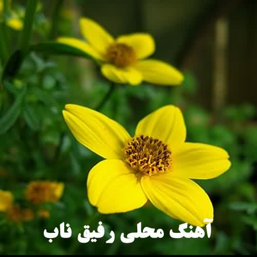 رفیق ناب امید مهدی زاده